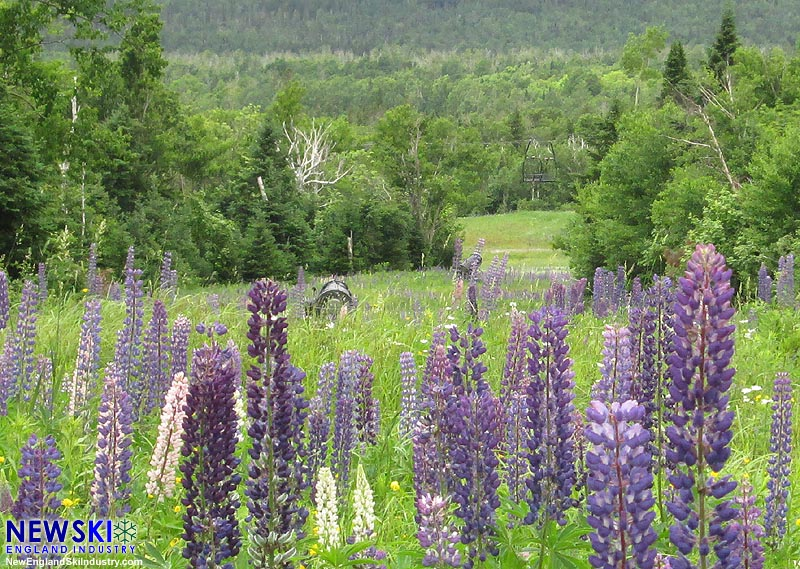 Snow guns buried in lupine (July 2016)